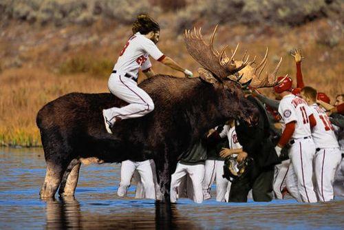 Werth-bullmoose