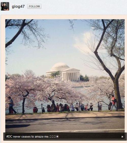 Cherry-blossom-gio